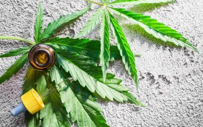 Cannabis Market Size